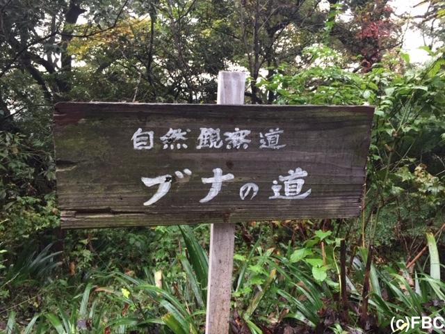 福井市の「ブナの道」