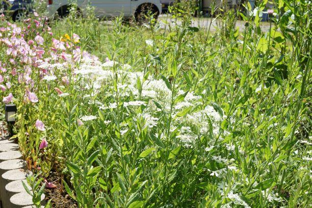 綺麗な花が初夏の風に揺れる。