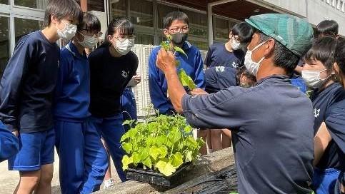 栽培方法が確立されていない野菜も!?地域の農家と子どもたちが一緒に取り組む「伝統野菜」づくり|SDGsリポート
