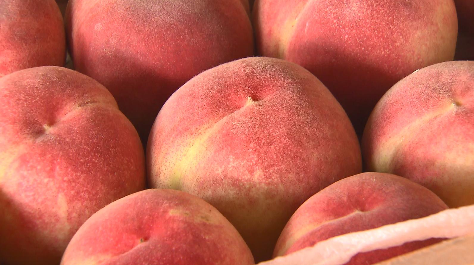 福島が誇る桃 絶品あかつきは今週末が出荷のピークに